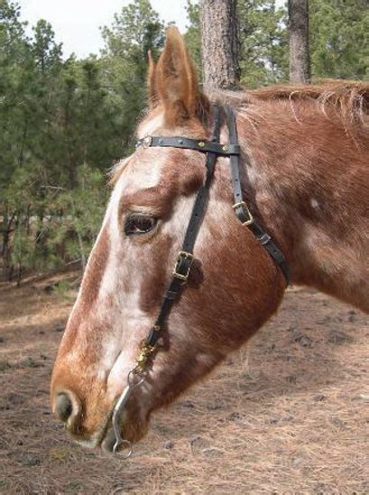Picture of Browband Headstall