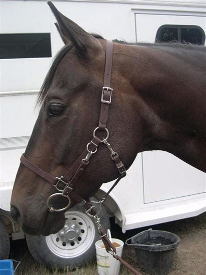 Picture of No Brow Halter Bridle with Bit Hangers